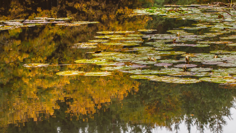 171019 Åkanderne spejler sig i efterårsfarverne i Kongsøre