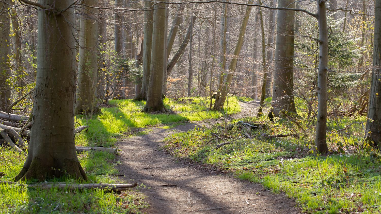 180419 Høve skov