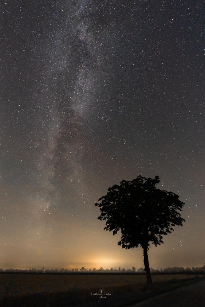 030819 Mælkevejen og træet