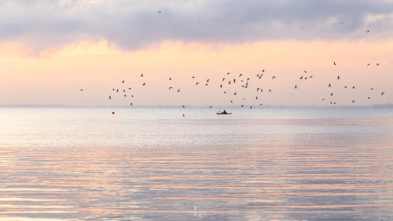 070919 Kajakroer i solopgangen fulgt af masser af fugle