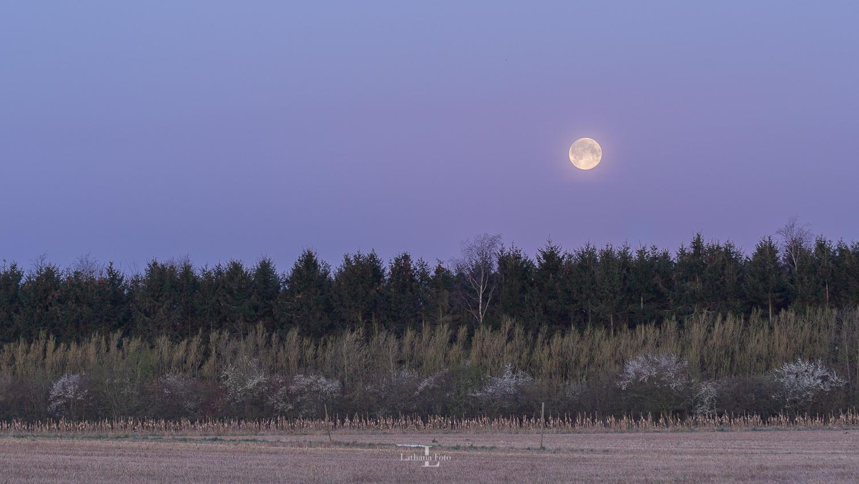 Fuldmåne 080420 (1 of 1)