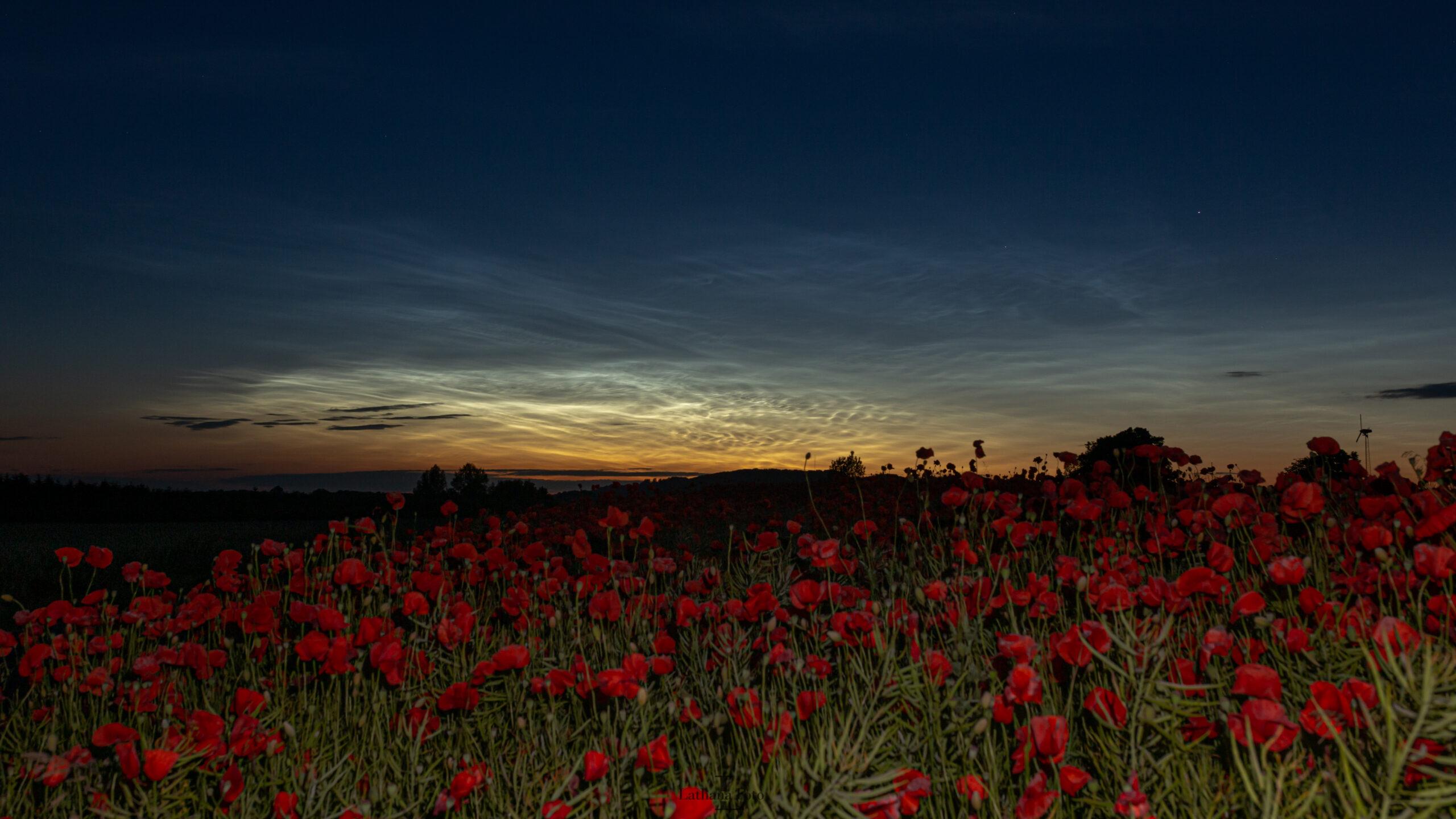 lysende natskyer og valmuer 170620 1a