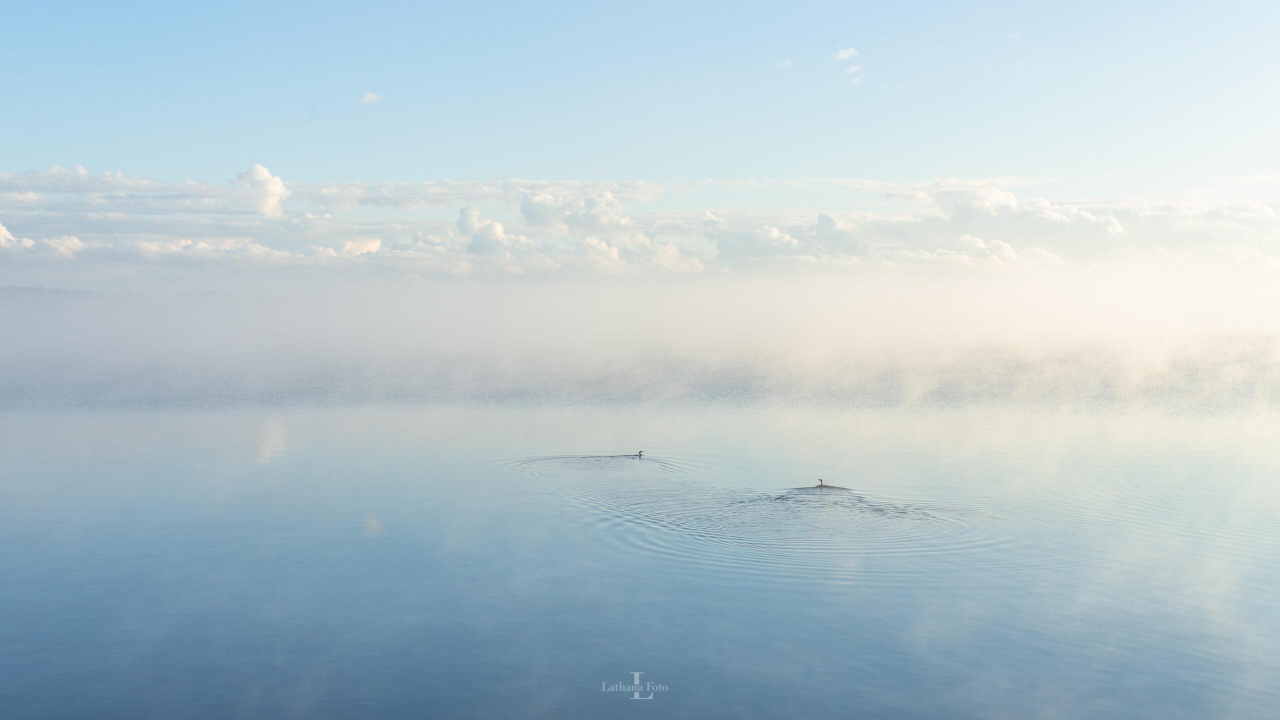 tåge i audebo 030920 1a