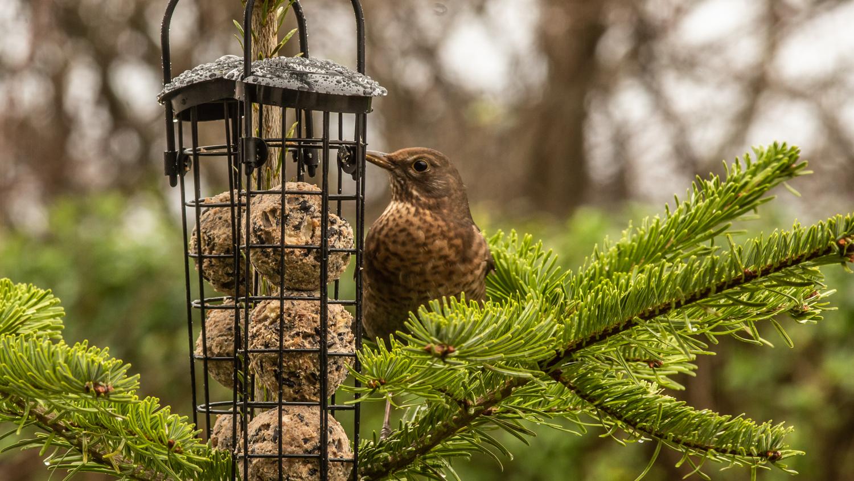 fugle i haven 301220 2