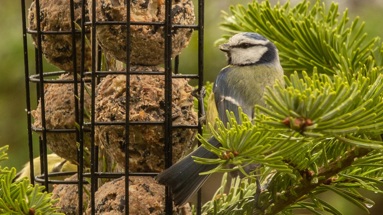 fugle i haven 301220 5